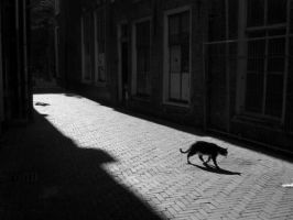 cat by wojcek
