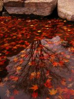 tree and his leafs in water by angedevil