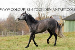 Itz 8 by Colourize-Stock