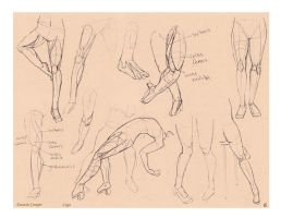 Legs - Comparative Anatomy by CatCouch