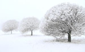 Three trees covered with snow by Maresolo