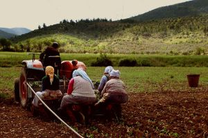 tobacco_workers by mertcheus