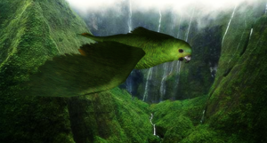 MMD Newcomer Amazon Blue Fronted Parrot + DL by Valforwing
