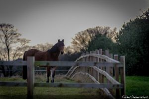 Horse by Whitwick by Auraomega