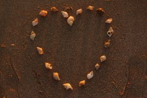 Shell Love by JessicaGilray