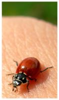 red ladybug by tomegatherion