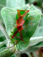 SHIELBUGS by iriscup