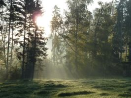enlighted meadow 3 by SelvaStock