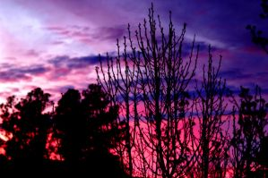 Pink And Purple Sunset by LDFranklin