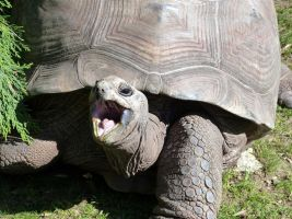 Laughing Turtle by smolensk65