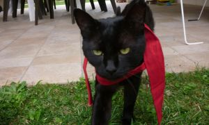 Playing with my cat 05 by Aldeas