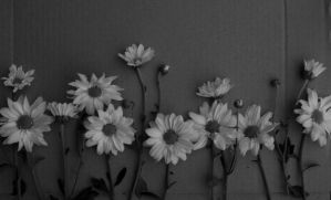 Little flowers black and white by vallendesterstock