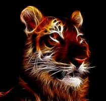 Tiger Fractal by levydesign