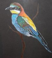 Bee Eater by Sidonie