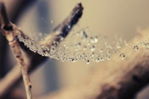 Webbed Rain by missdjt