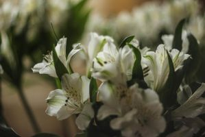 Flowering my home by LifeFun