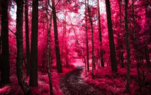 Infrared Trees - pt. VII by myINQI