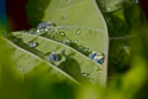 Rain Drops On The Leaf by nathanpc