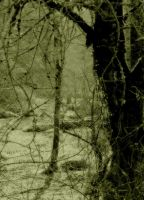 Place of sweet decay... by wolfcreek50