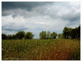 Postcards from the back 40... by Nariane