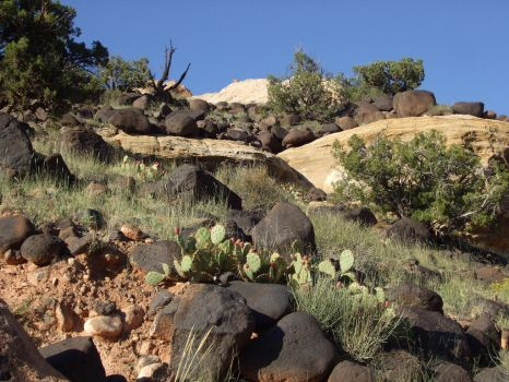 Lava Boulders and Cactus by elissadido