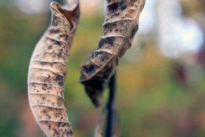 Dead Leaves by StolenSecrets