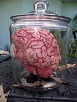 Brain in a Jar by tkguess