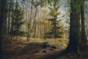 Forest 57 by Amalus