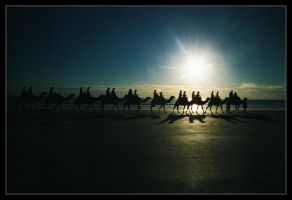 Camels on Cable Beach 2 by wildplaces