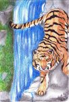 Tiger on the Waterfall by xXBlackwolfangelXx
