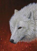 White Wolf II by Hareguizer