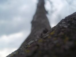 A Tree's Perspective 4 by invaderjanie