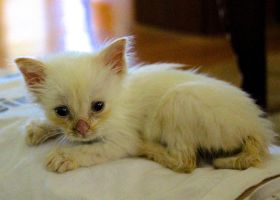 Baby Kitty by Lambieb123