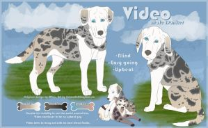 Video Reference Sheet (Contest Entry) by AnimalArtKingdom