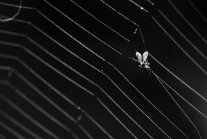 They spun a web for me by Geoluhread