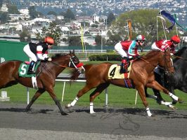 Golden Gate Fields - Racers 47 by Nyaorestock