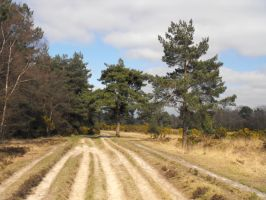 Ashdown Forest 1 by kool007kat-stock