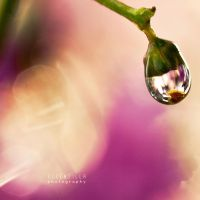 forever captured water drop by ellenzilla