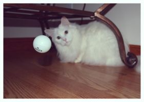 Cat and Ball by Box-of-fluffy-ducks