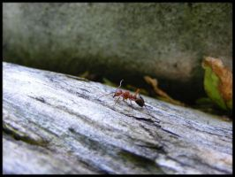 Ant on a Log by BJM121