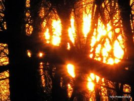 setting sun threw trees by Toneproductions1