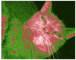 my cat in red and green by DarkNoil
