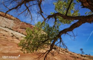 Green Leafs Red Cliffs  by mjohanson