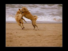 Playful dogs by mercyop