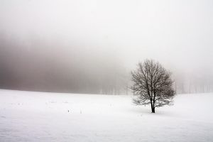 Winter landscape by MonnieB