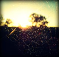 Spiderweb by Cramby2912