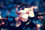 Spring Blossom 003 by MiaLeePhotography