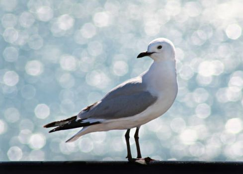 Seagull by adrenaline-rest