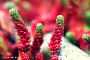 Succulents by chartreuseeyes89