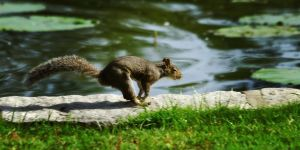 squirrel20 by redbeard31